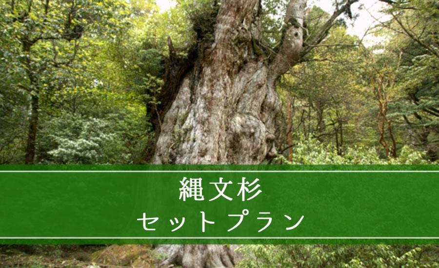 縄文杉セットプラン